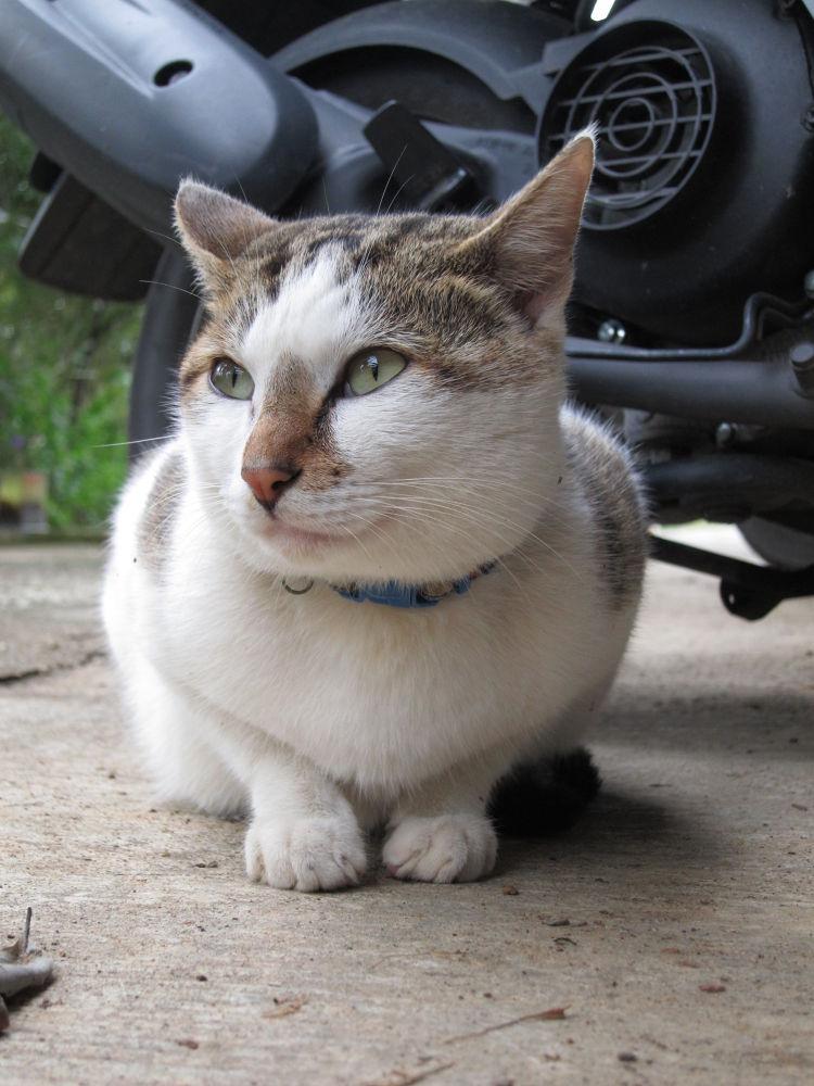 Cat by HelenHu