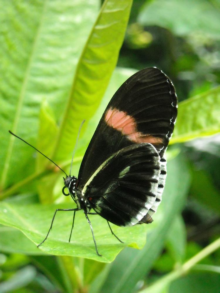 Butterfly Conservatory - Niagara  by Cathy Collins