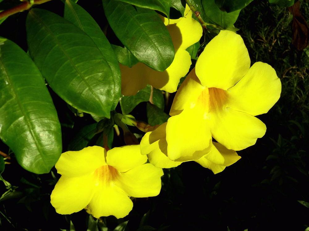 bright yellow by soumitramaity39
