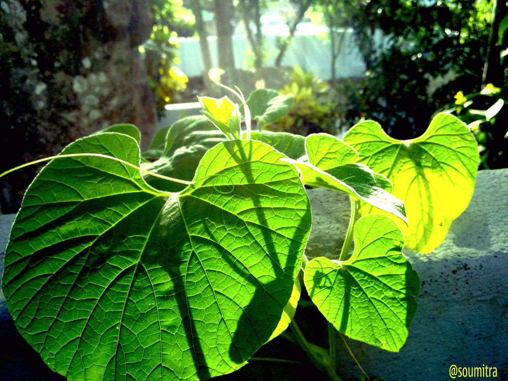 green leaves by soumitra maity