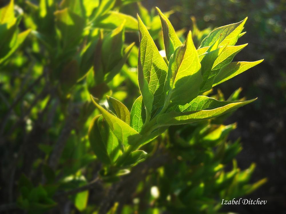 Leaves by Izabel Ditchev