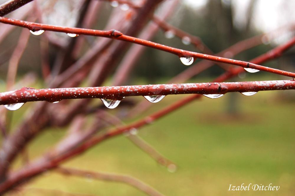 Water droplets by Izabel Ditchev