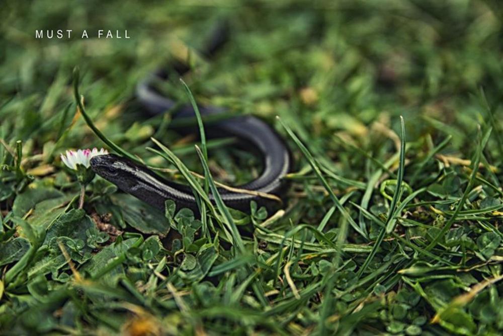 snake by Mustafa Sungur