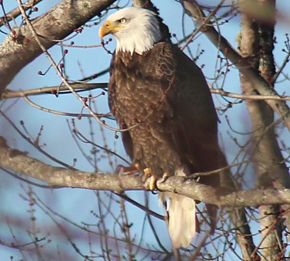 Eagle LookOut Fredericton New Brunswick Canada by HaroldLDoherty