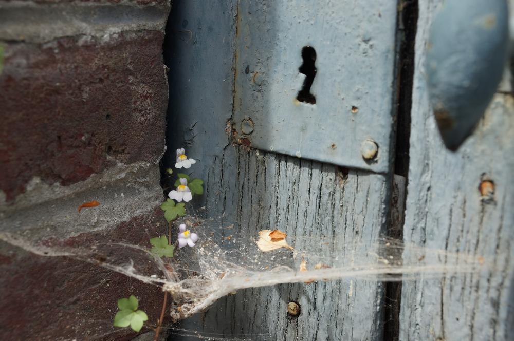 where is the spider ? by Sandrine Mathilda