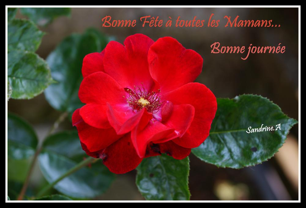 bonne fete maman / mother's day today by Sandrine Mathilda