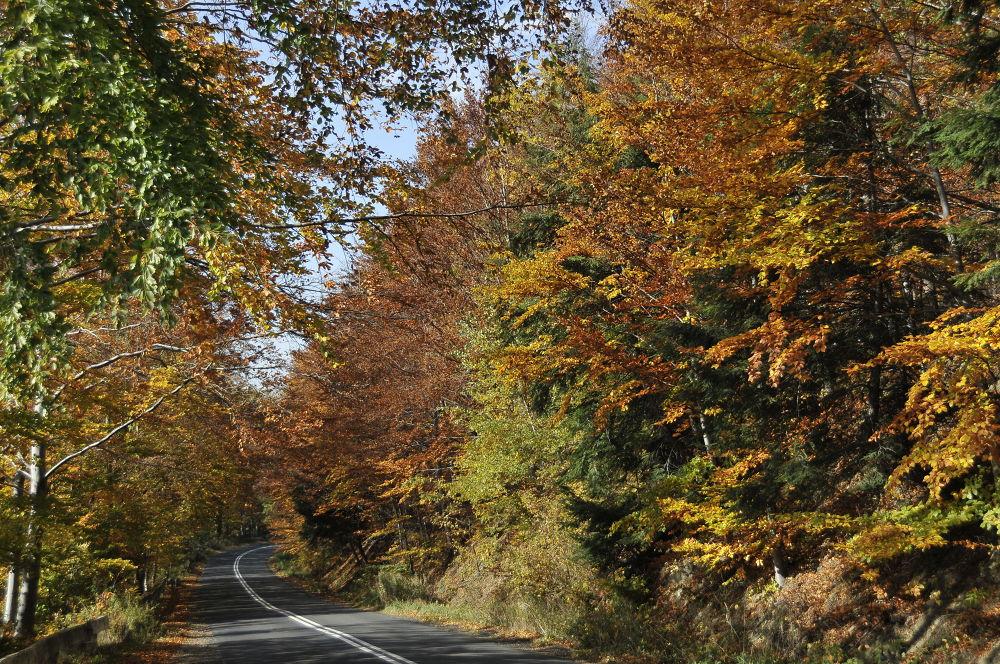 Road.... by remigiuszszydzisz