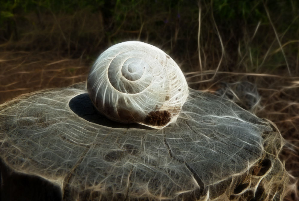 Photo in Abstract #snail #home #house #majdan #serbia #abstract