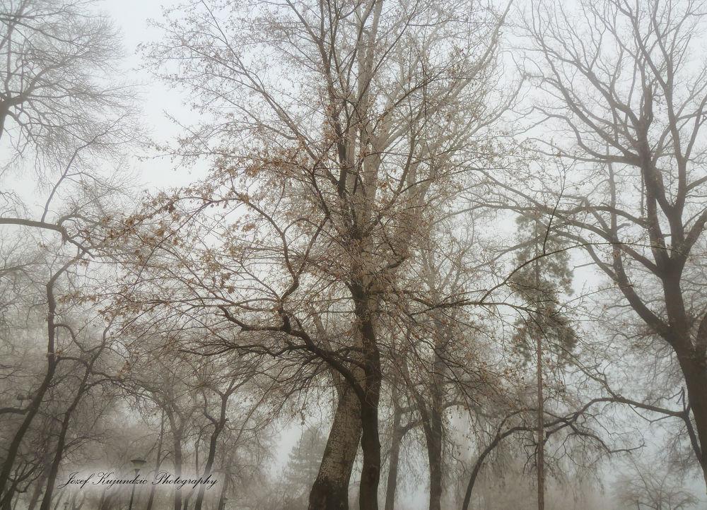 tree of beauty  by Jozef Kujundzic