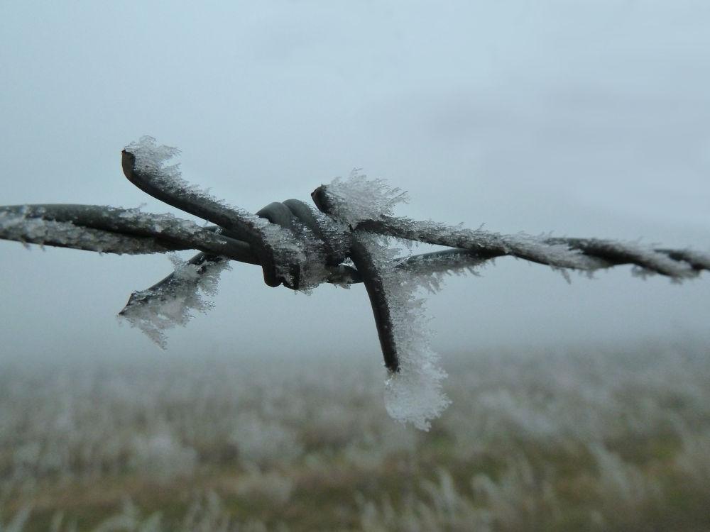 wire n frost by Jozef Kujundzic