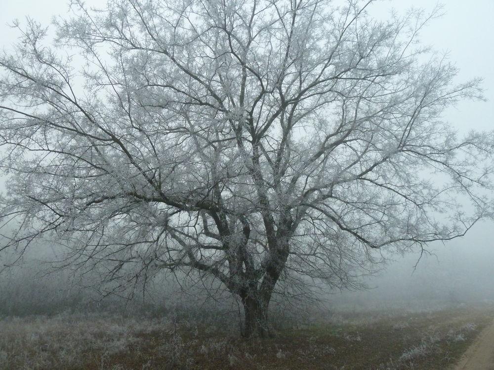beauty in a tree by Jozef Kujundzic