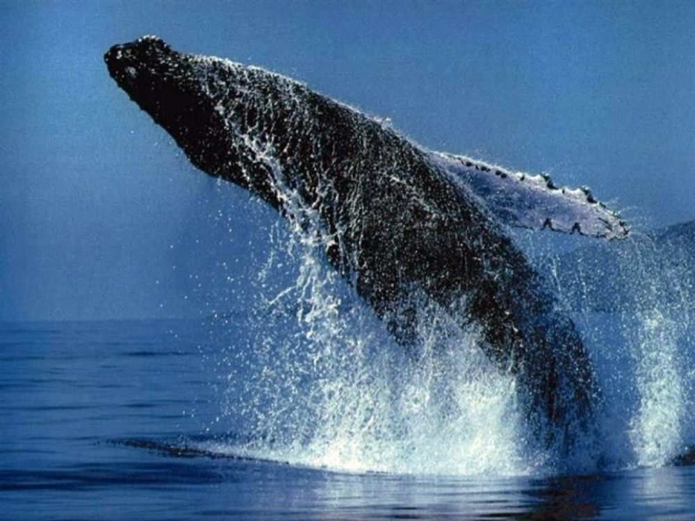 reykjavik-whale-watching by island4ever