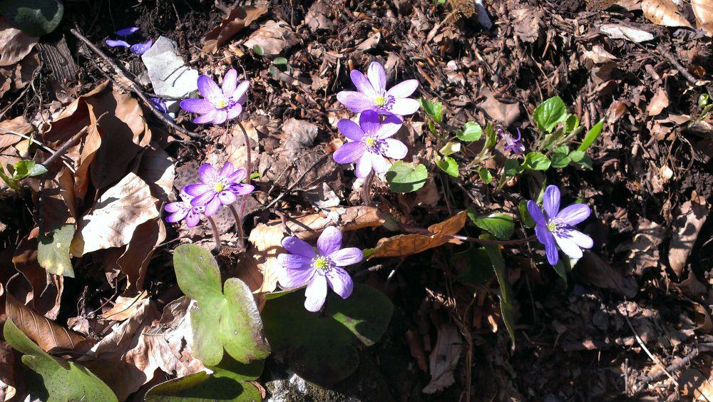 Spring in purple by KaterinaTodorova