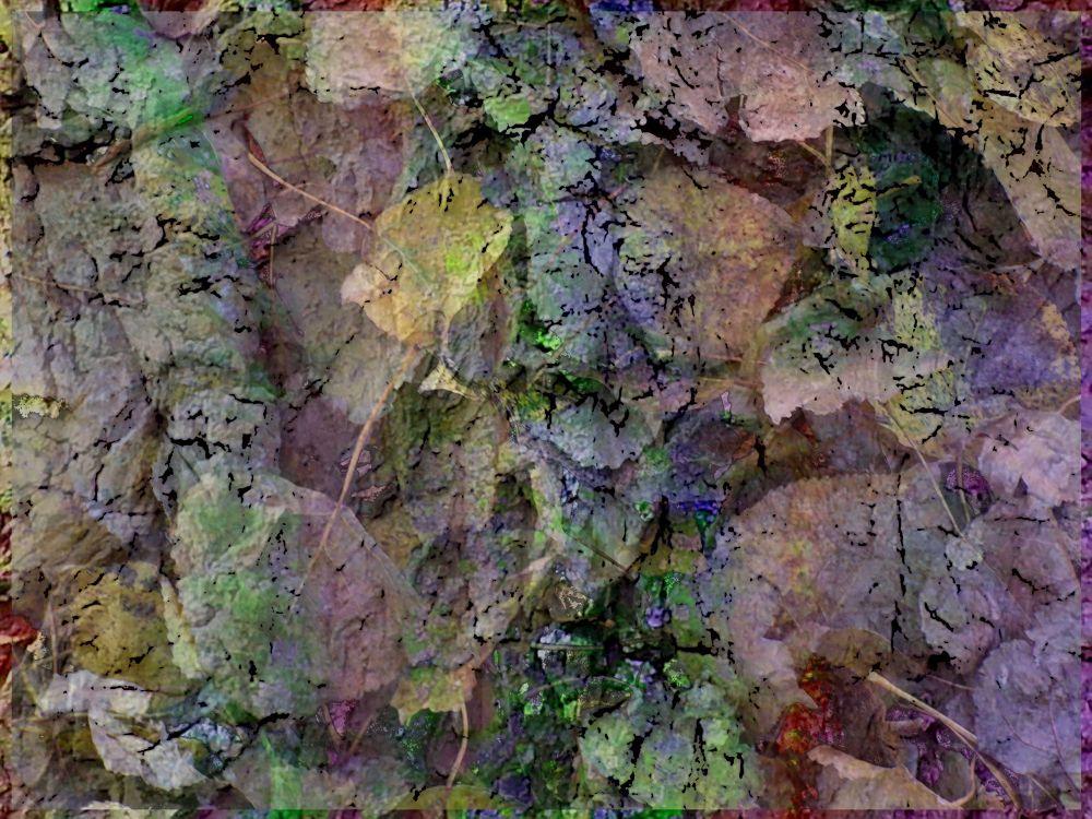 autumn leaves by Tanja Henn