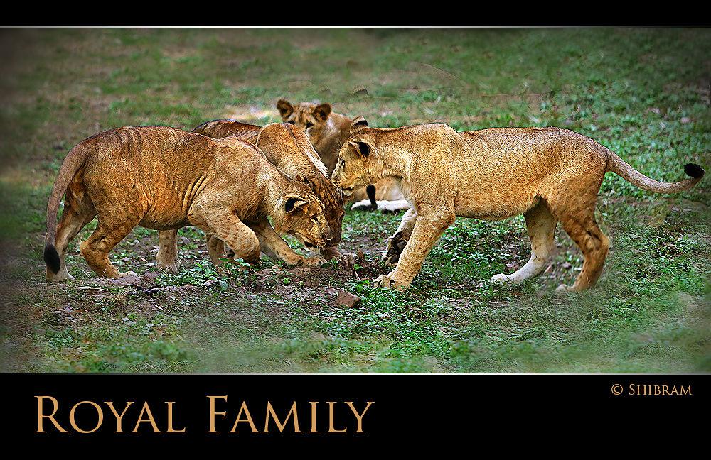 lion.jpg by shibram