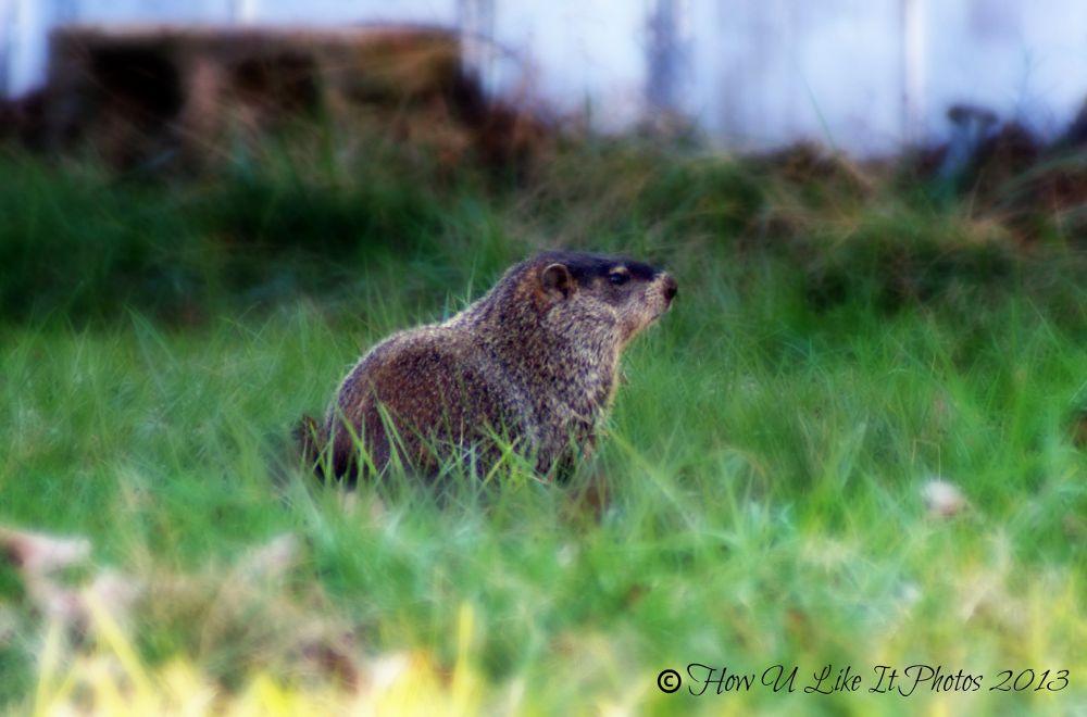 Mr. Beaver or Mrs. Beaver by Irene