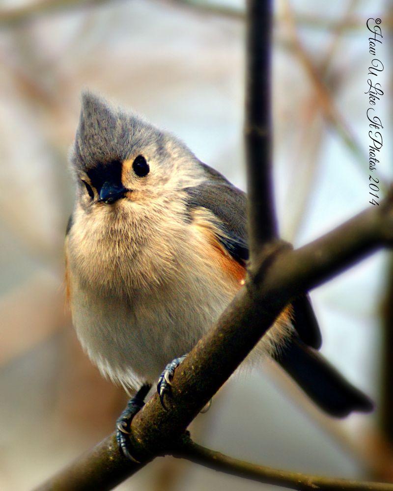 Photo in Random #wildlife #birds #winter