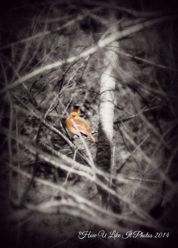 Photo in Random #bird #nature #life #landscape