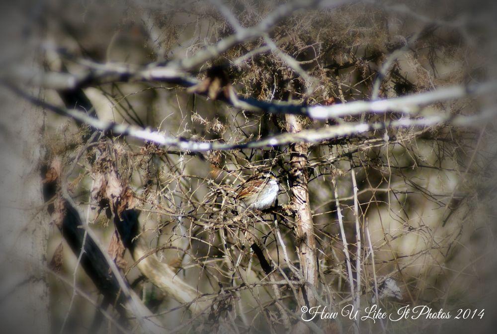 Photo in Nature #birds #winter