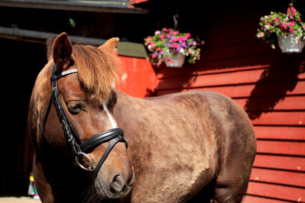 My little pony by Brandal