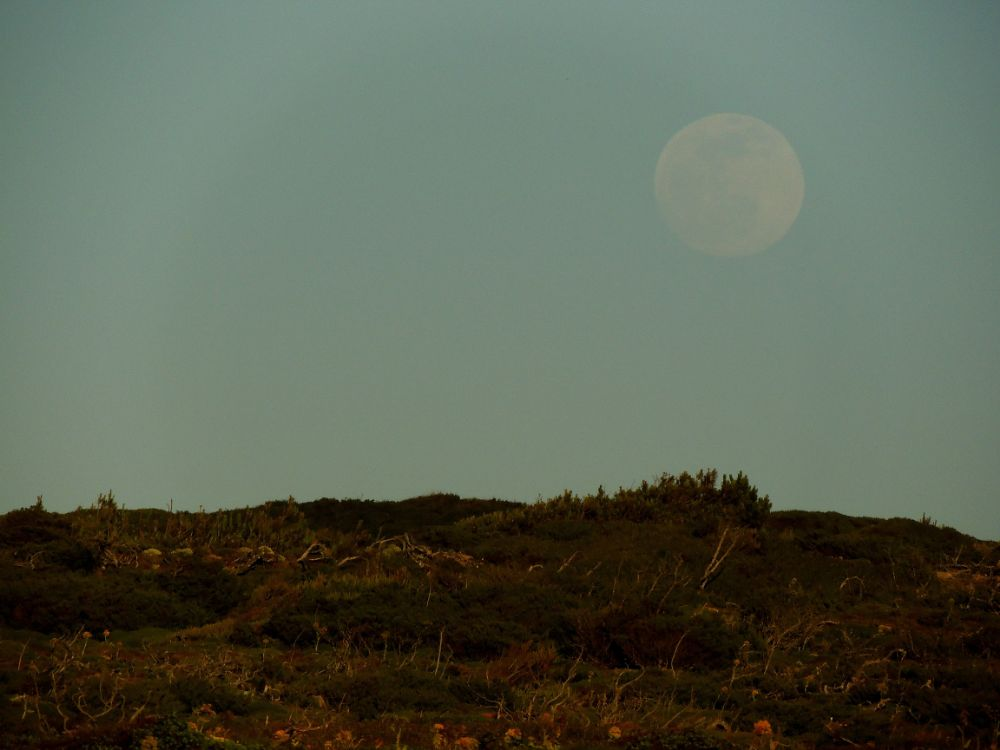 Pale Moon over the Hill by Isabel Sottomayor