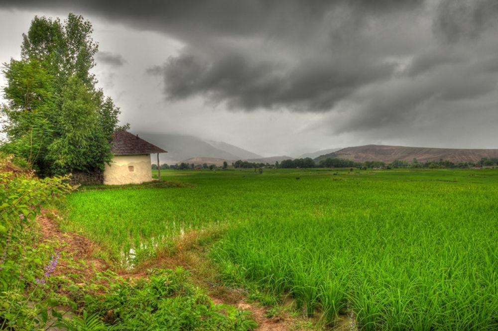 iran-mazandaran- rice farm by mohammad52