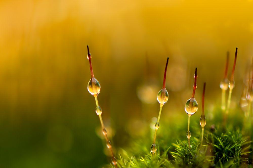 Poinsettia Leaf | Macro