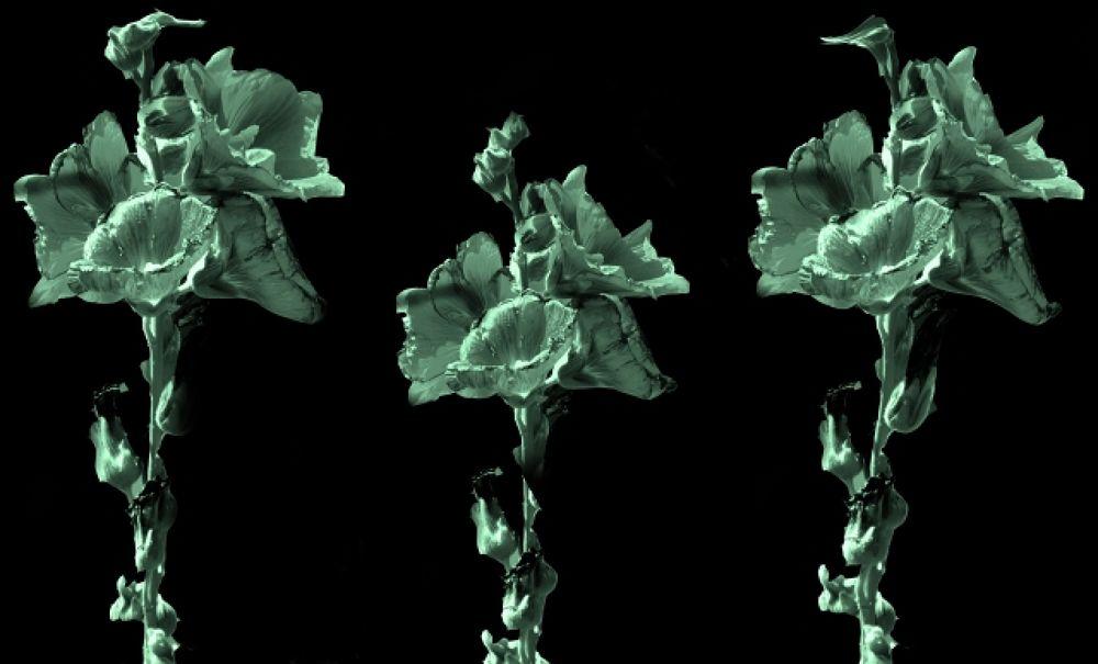 amazing-flowers-manjot-singh-sachdeva.JPG by Manjot Singh Sachdeva