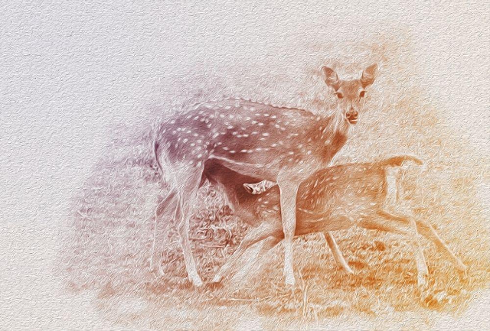 deer mother child feed milk nutrition photography habitat endangered.JPG by Manjot Singh Sachdeva