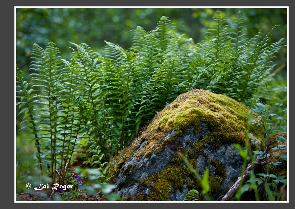 The Green Nature_414 by RogerLai