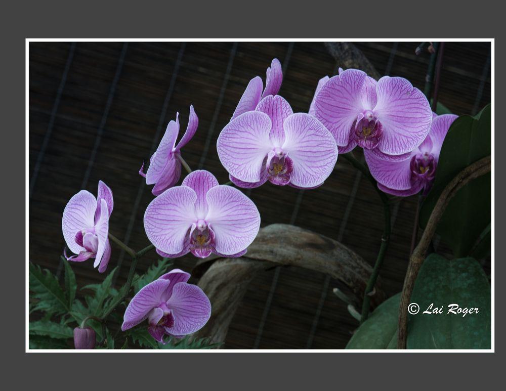 Photo in Random #flowers #purple