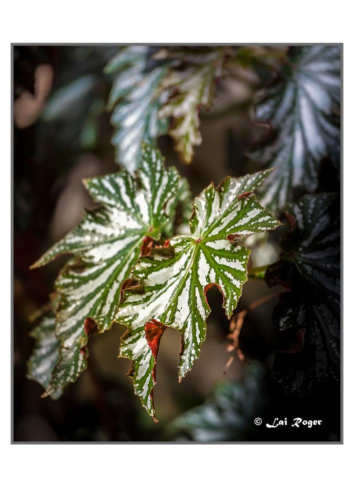 Green Leaves by RogerLai