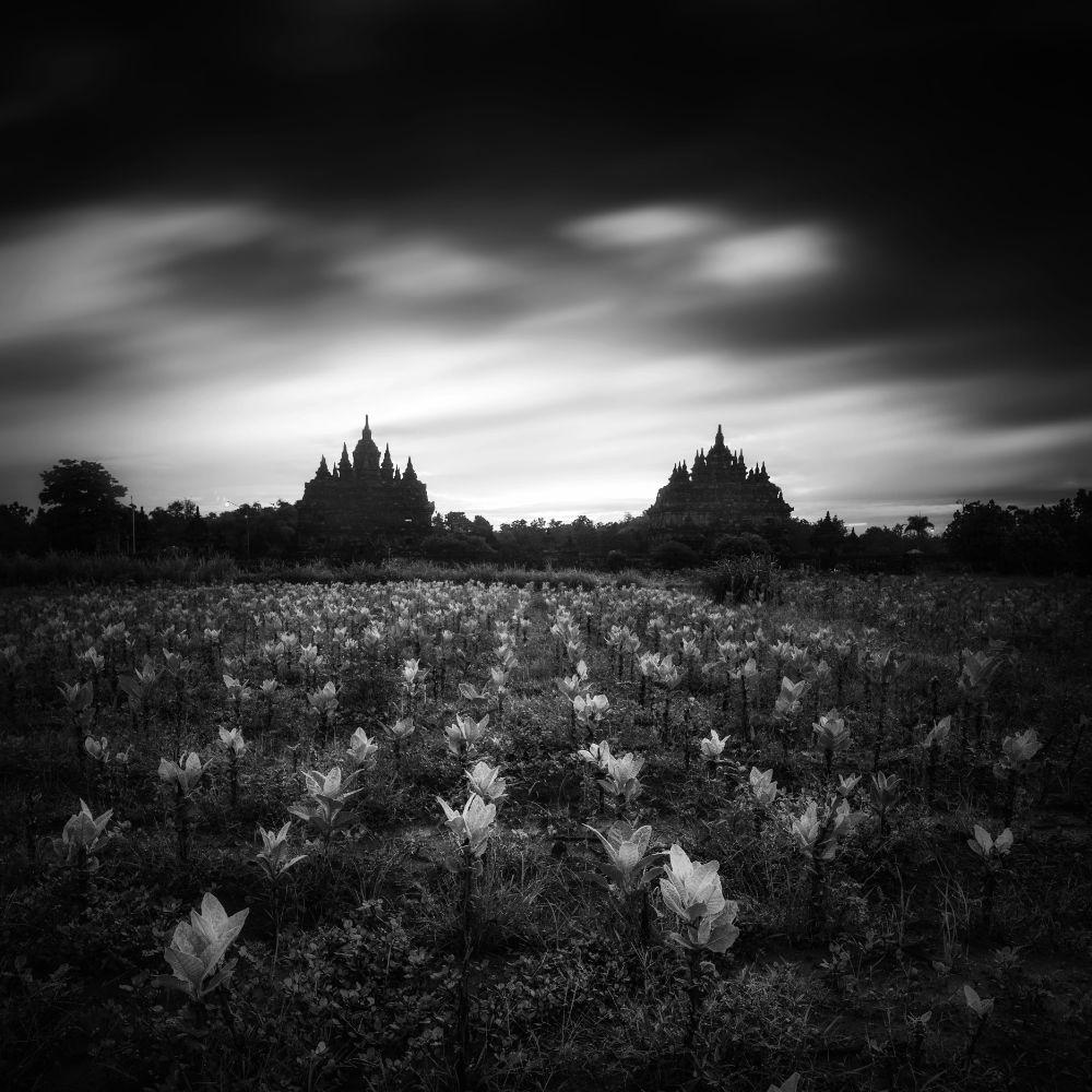 Down to earth  by Daniel Tjongari