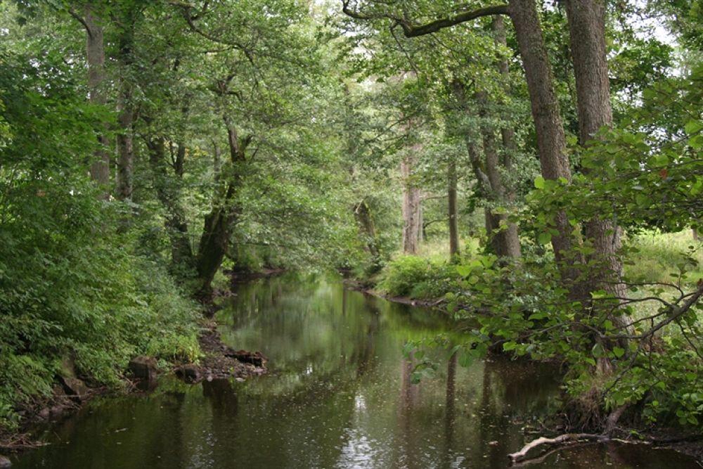 river by pererik22