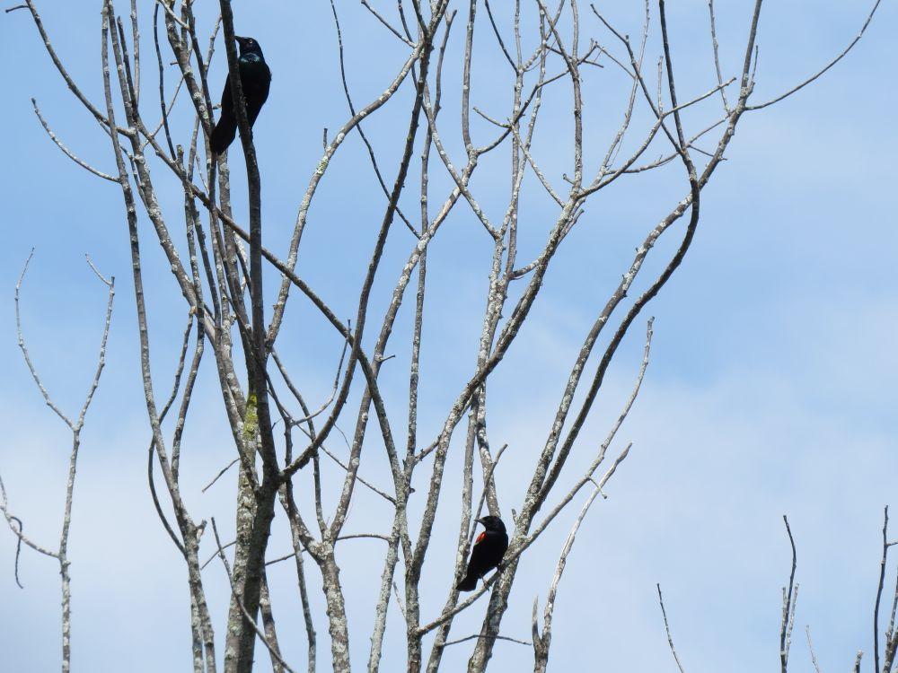 birds by Adam Looney