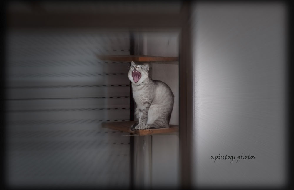 the cat's mouth by apintogsphotos