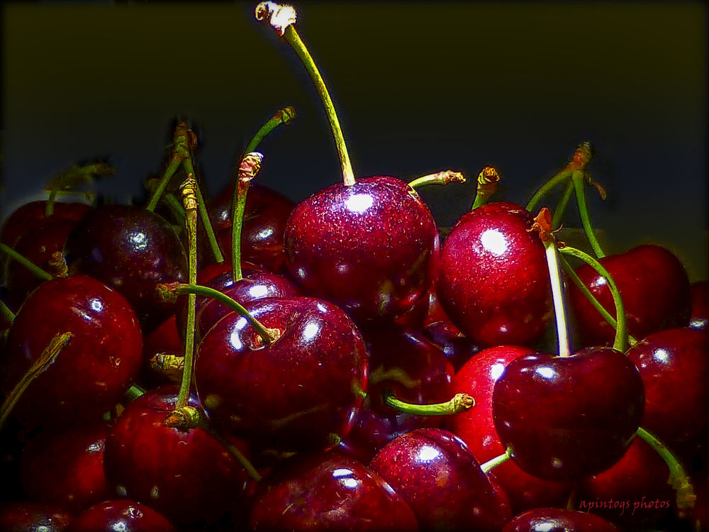 stiff and sweet cherries by apintogsphotos