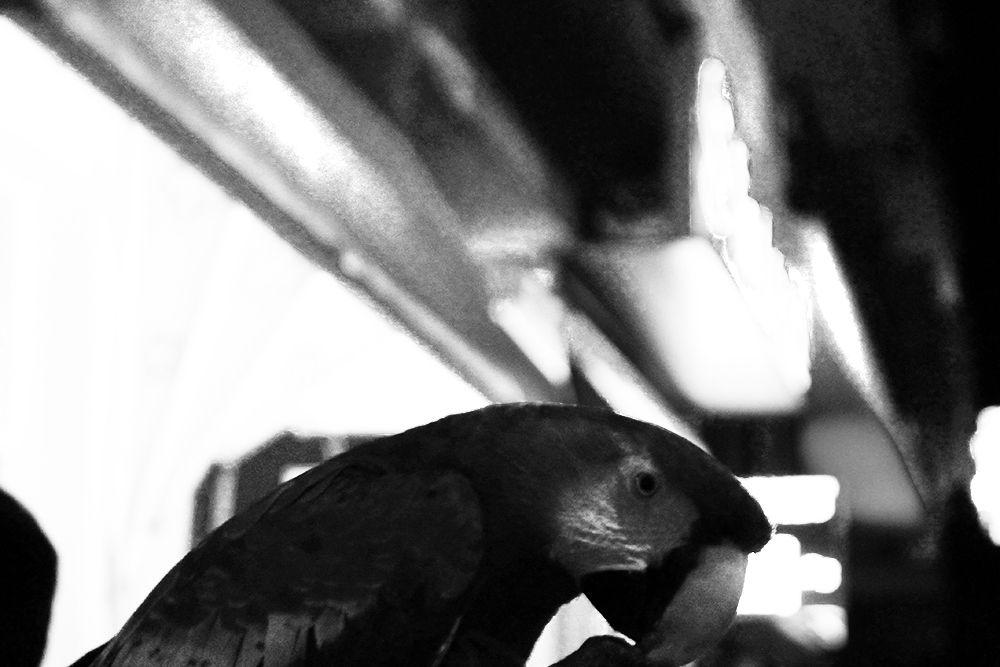 Parrot by PanagiotisGazis