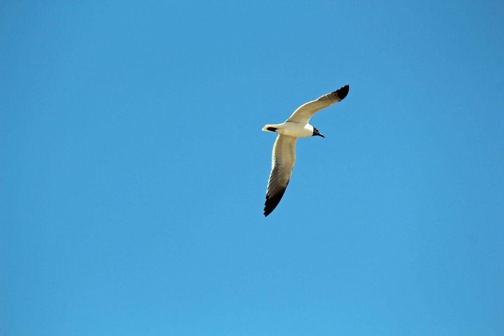 good looking bird.jpg by Linda L. Offen