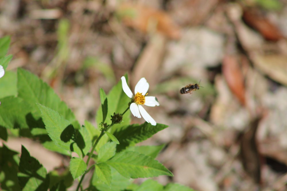 Bee take off by Linda L. Offen