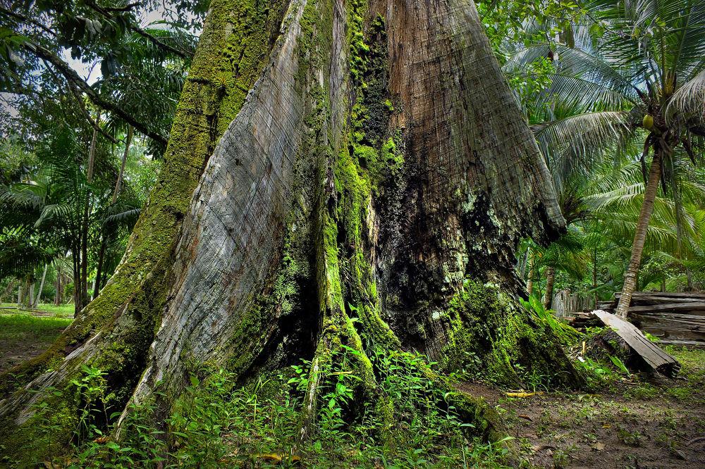 Abaetetuba, Pará, Brasil (Amazônia) by Rui Oliveira Santos