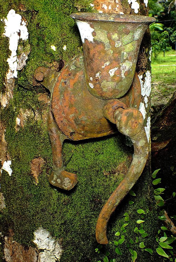 old manual coffee grinder by Rui Oliveira Santos