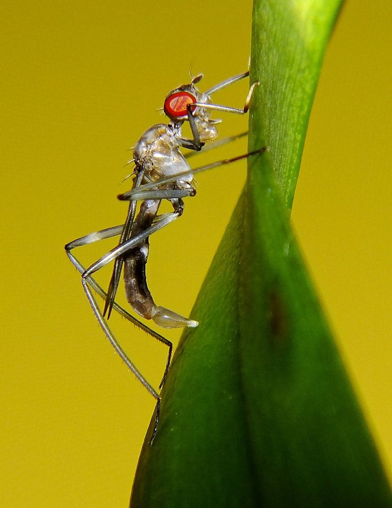 insects, fly or wasp? by Rui Oliveira Santos