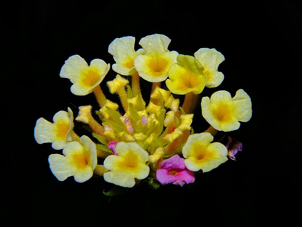 micro flower - 5mm each by Rui Oliveira Santos