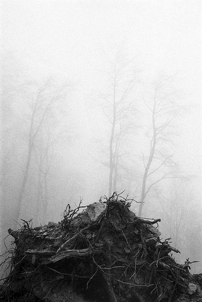 © Milan Hristev, Forest tales by milanhristev