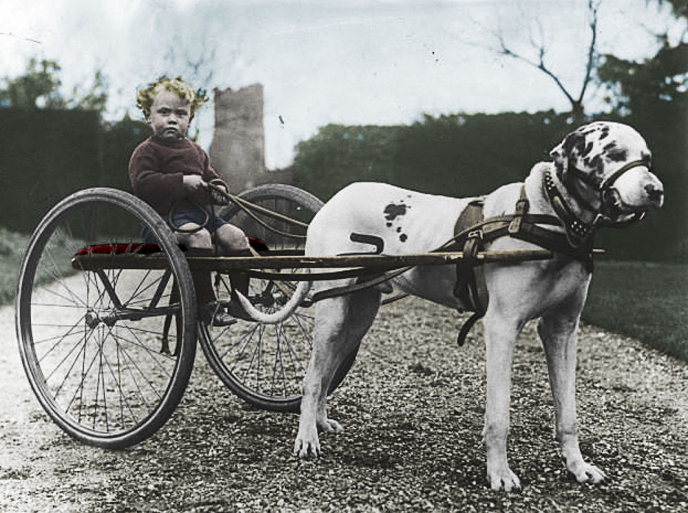 Dog chariot - 1930 Color by Gustav Roa