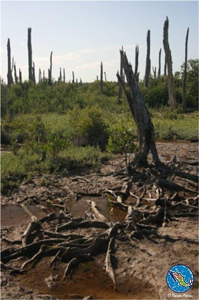 Celestun, Petrified forest. by El Planeta México