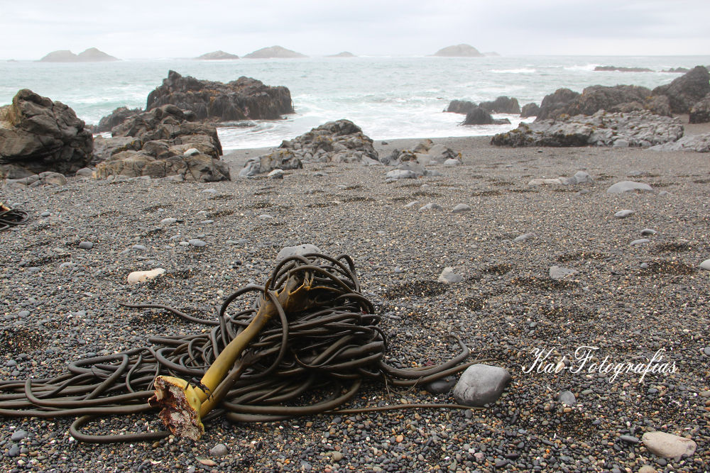 playa Brava, Chiloe-Chile (102).jpg by danabanega