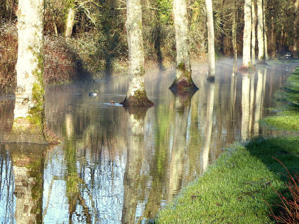 Flooded mill stream, Arundel by Chris Roughley