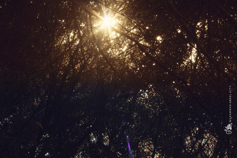 Warm Hope by Muhammad Abdel Atty